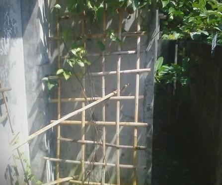 Ide Anyaman Bambu Untuk Tanaman Rambat